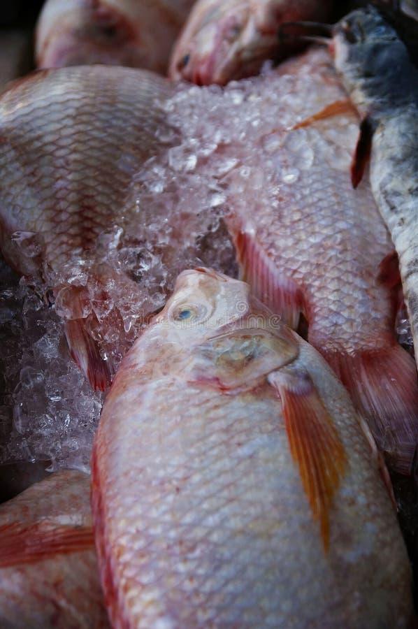 Los pescados del pargo rojo venden en el mercado foto de archivo