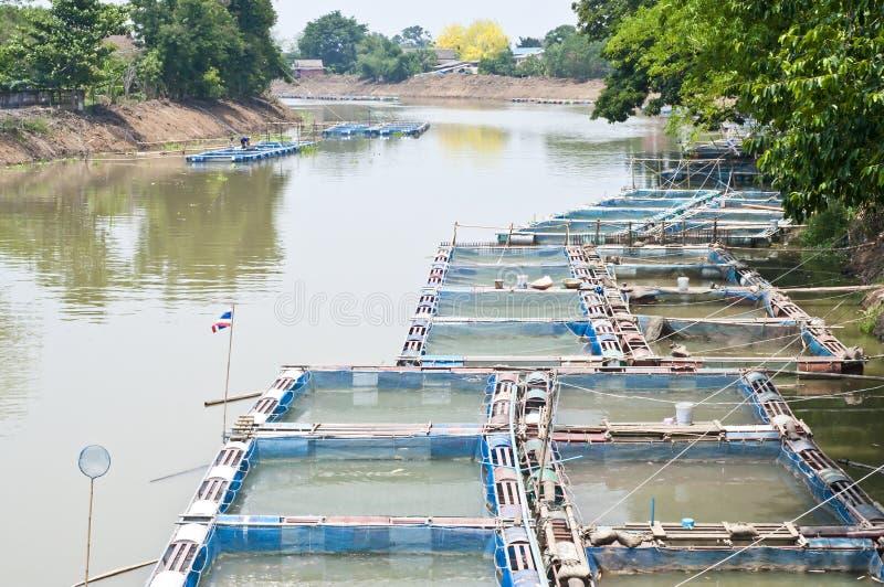 Los pescados enjaulan el cultivo en el río. foto de archivo libre de regalías