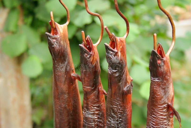 Los pescados fumados cuelgan en el gancho Comida secada tradicional - anguila europea Anguila anguila imágenes de archivo libres de regalías