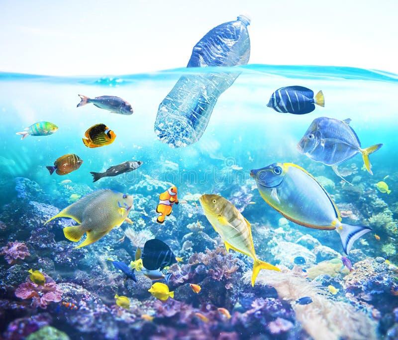 Los pescados miran una botella flotante Problema de la contaminación plástica bajo concepto del mar fotos de archivo