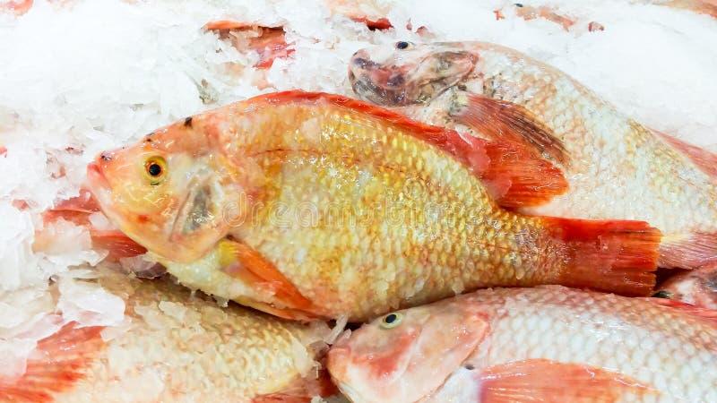 los pescados rojos de la Tilapia en estante con el hielo para la venta en supermercado fotografía de archivo