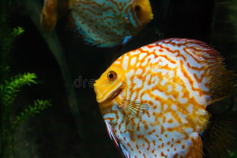 Los pescados se cierran para arriba imagen de archivo