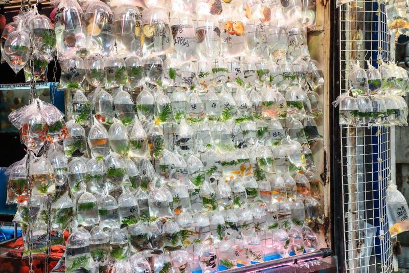 Los pescados tropicales del acuario y plat en el mercado del pez de colores de Hong Kong fotos de archivo
