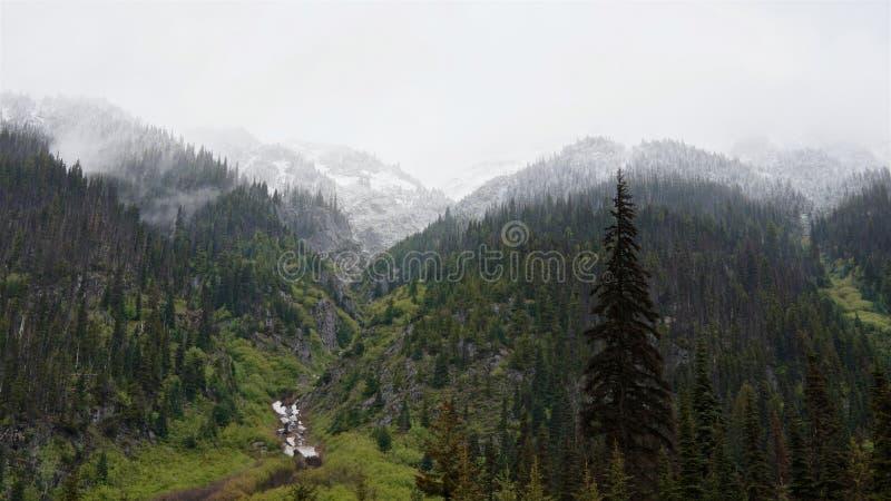 Los picos coronados de nieve de las montañas del bosque y de la hierba verde en los bancos de la corriente fotos de archivo