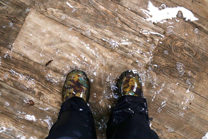 Los pies de la mujer que llevan las botas impermeables, colocándose en una casa inundada con los pisos de madera del vinilo imágenes de archivo libres de regalías