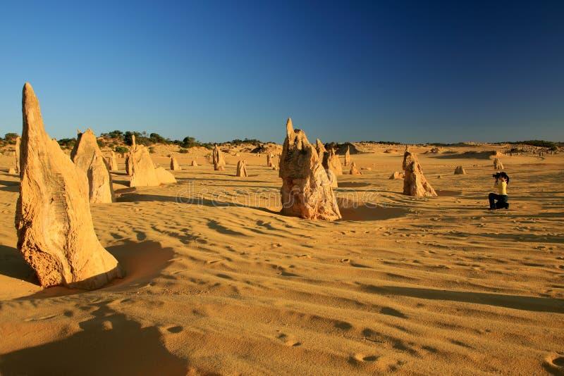 Los pináculos abandonan, Australia occidental foto de archivo libre de regalías