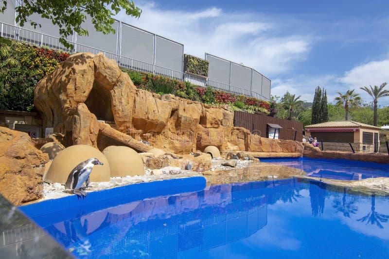 Los pingüinos oscilan la piscina de agua azul Marineland imagen de archivo