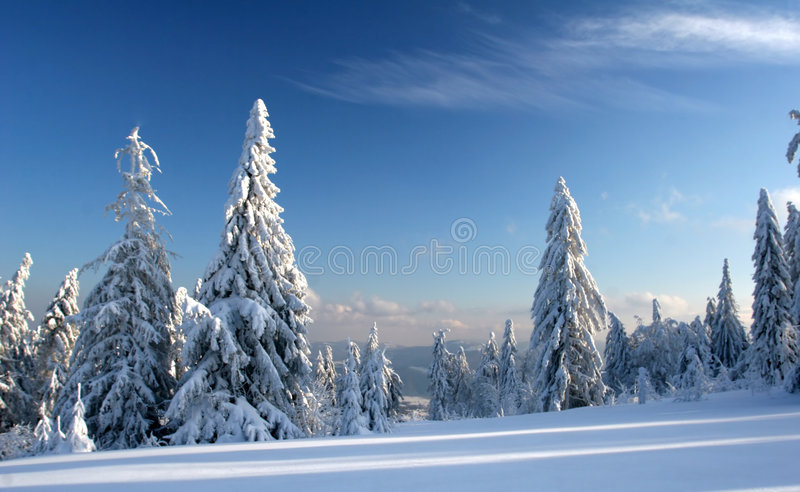 Los pinos cubrieron nieve congelada imágenes de archivo libres de regalías