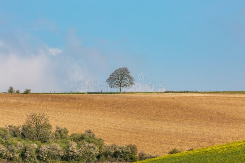 Los plumones del sur cultivan paisaje foto de archivo libre de regalías