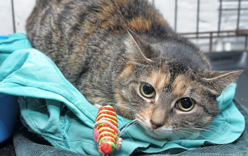 Los pobres asustaron el gato fotos de archivo libres de regalías