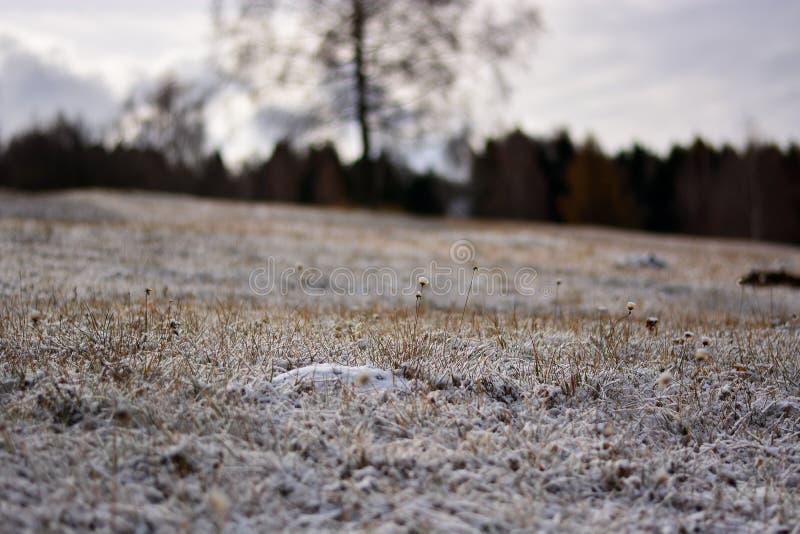 Los prados congelan con la llegada de invierno fotografía de archivo