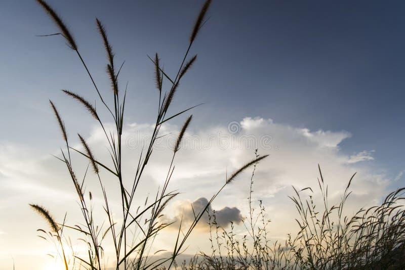 Los prados florecen la hierba con el fondo de la puesta del sol del cielo en invierno imagen de archivo