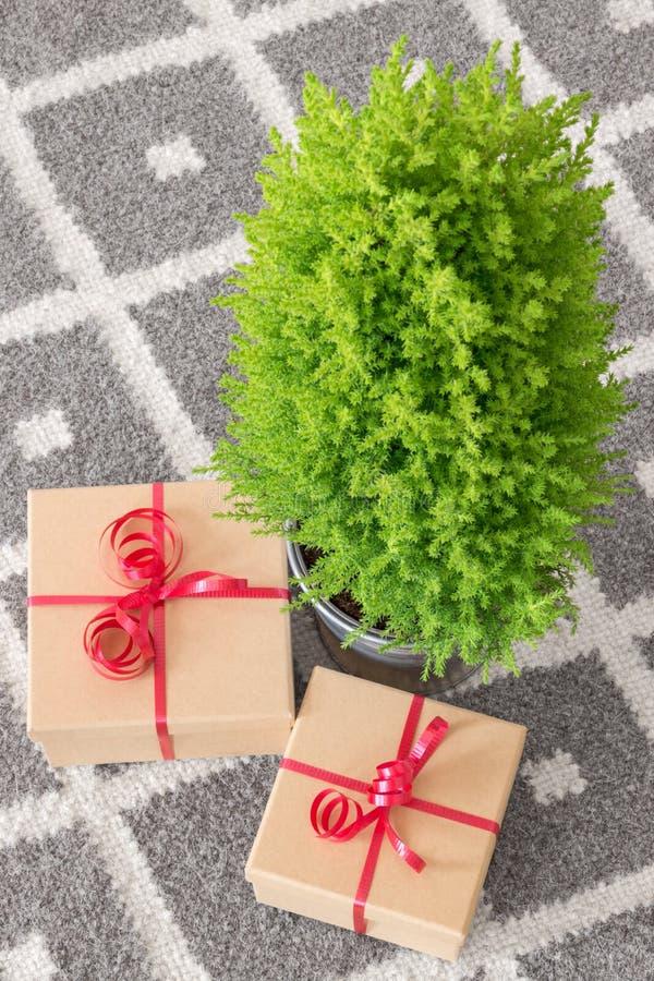 Los presentes acercan al pequeño árbol de navidad fotos de archivo libres de regalías