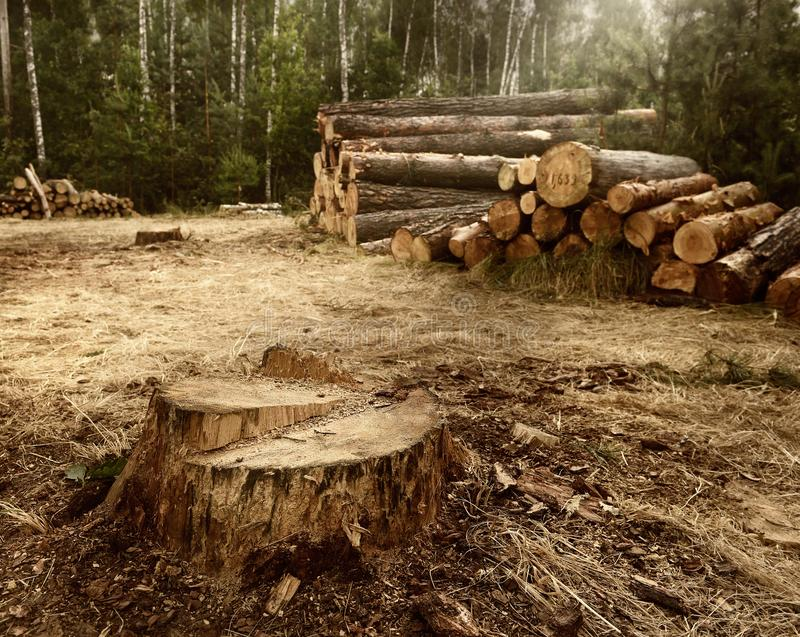 Los problemas separados del bosque de la vida humana y de la influencia en la naturaleza Problemas ecol?gicos fotografía de archivo libre de regalías