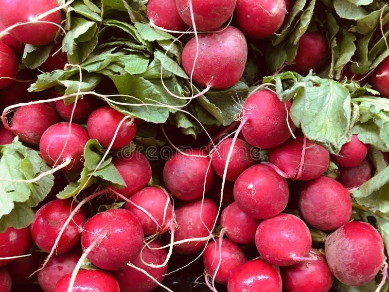 Los rábanos frescos son una verdura de raíz comestible con un gusto acre fotos de archivo libres de regalías