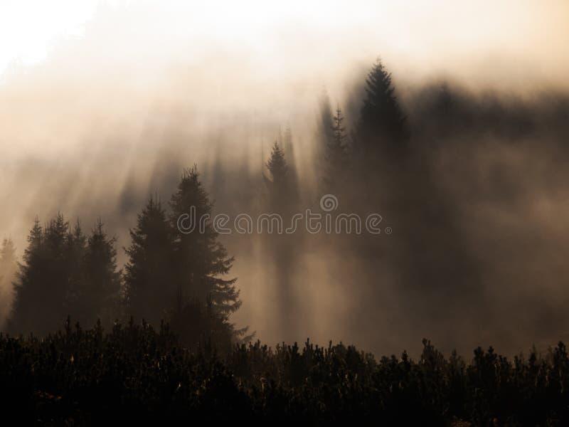 Los rayos de la luz del sol penetran la niebla de la mañana en el bosque fotos de archivo