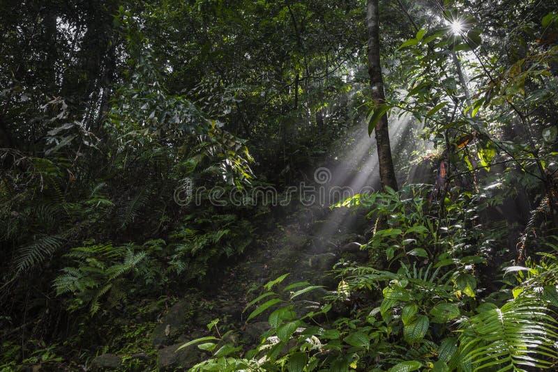 Los rayos de la luz del sol vierten a través de las hojas en una selva tropical en Sinharaja F imagen de archivo
