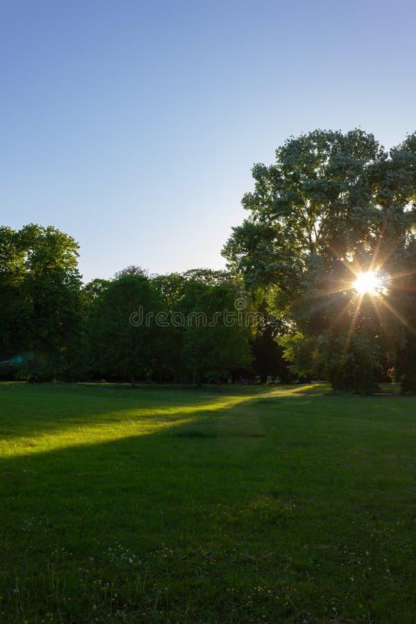 los rayos de sol en una ciudad parquean en puesta del sol de la tarde de la primavera imagenes de archivo