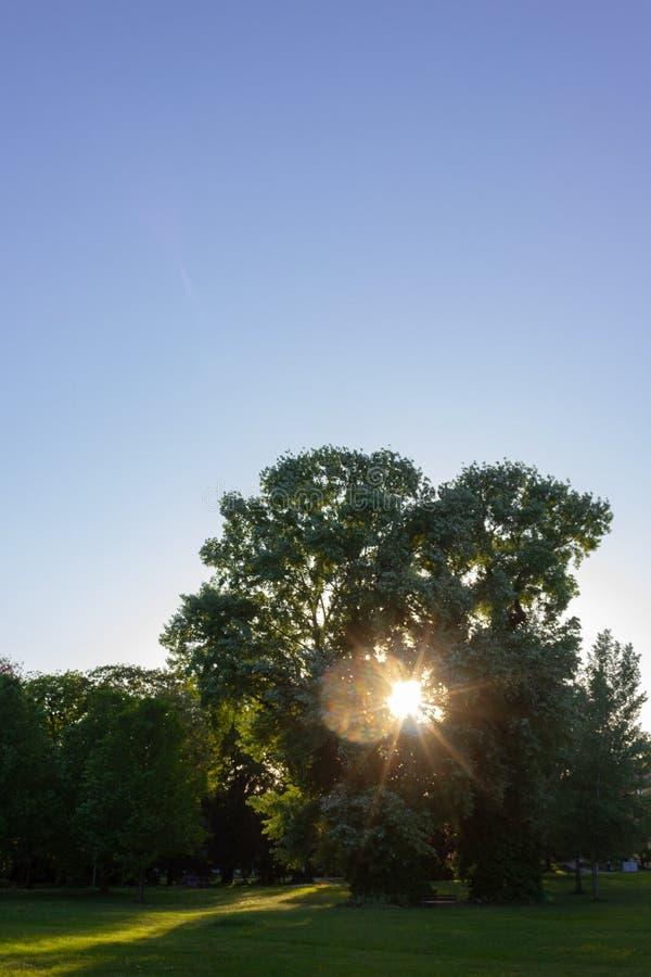 los rayos de sol en una ciudad parquean en puesta del sol de la tarde de la primavera fotos de archivo libres de regalías
