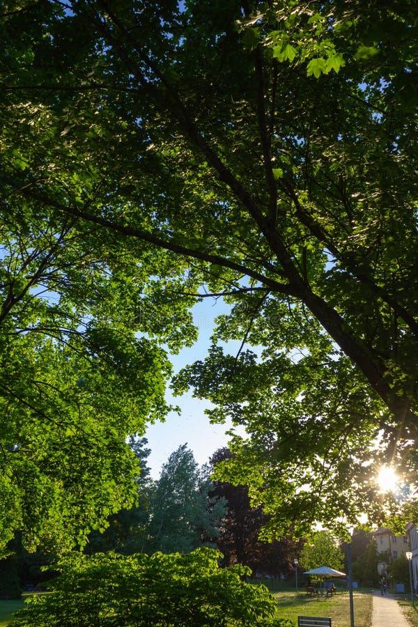 los rayos de sol en una ciudad parquean en puesta del sol de la tarde de la primavera imágenes de archivo libres de regalías