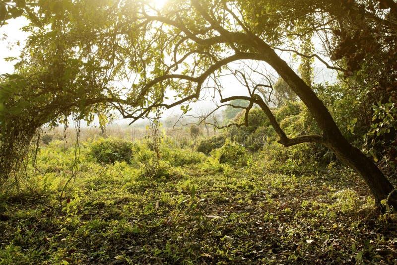 Los rayos de sol vierten en el bosque del otoño fotografía de archivo