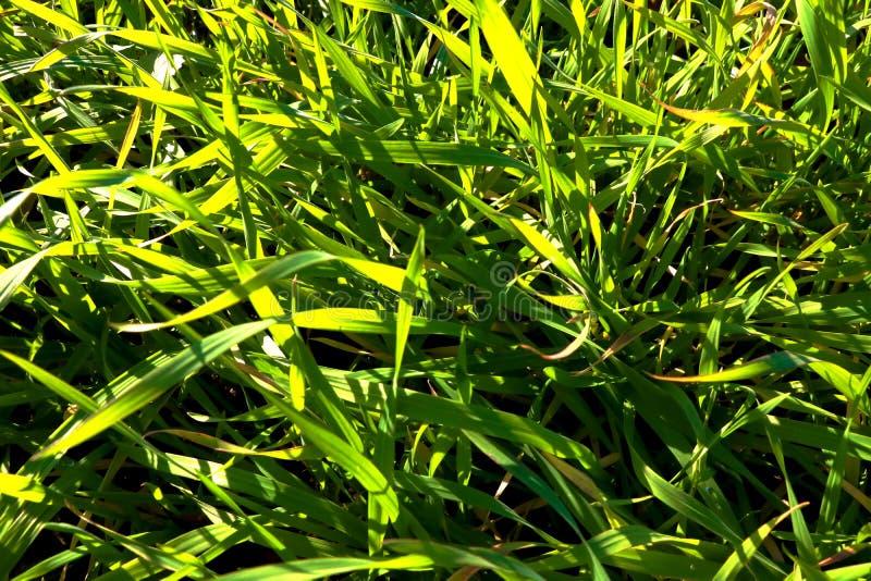 Los rayos del sol caen en la hierba verde fotos de archivo libres de regalías