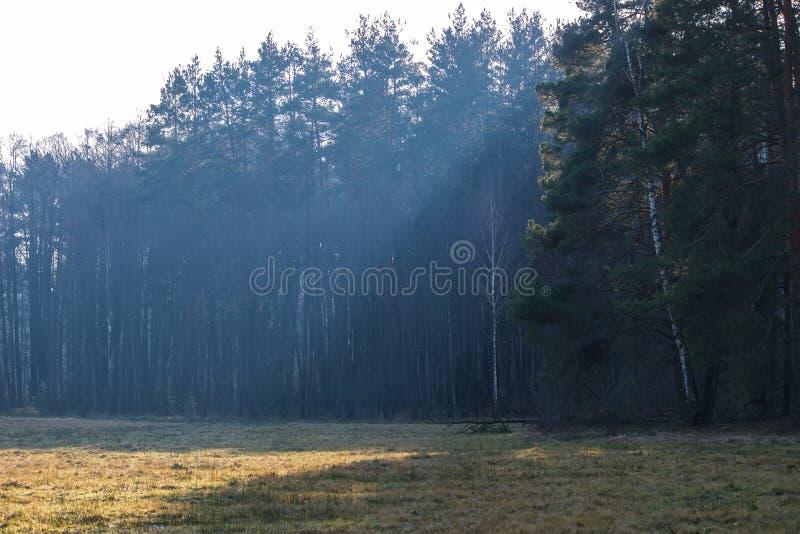 los rayos del sol caen en una parte del bosque imágenes de archivo libres de regalías