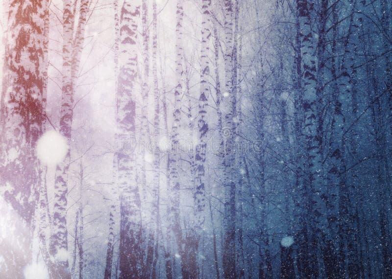 Los ?rboles bajo nevadas dise?an imagen de archivo