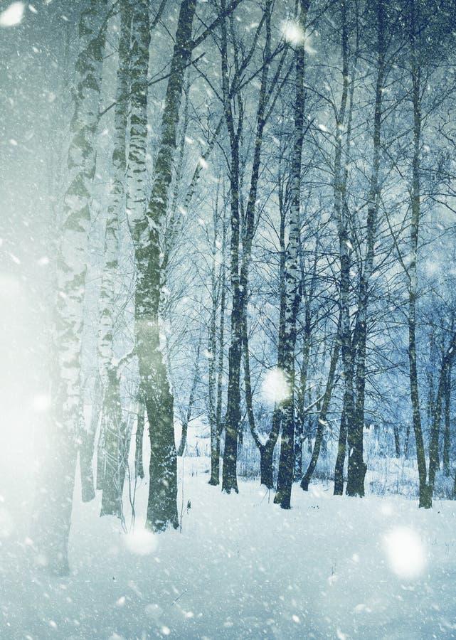 Los ?rboles bajo nevadas dise?an imagen de archivo libre de regalías