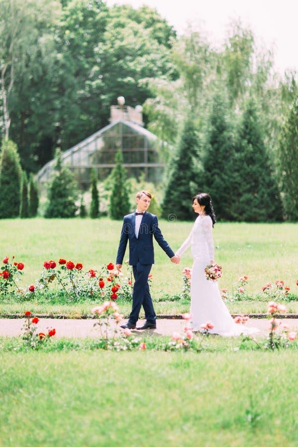 Los recienes casados están llevando a cabo las manos y están caminando en el parque foto de archivo