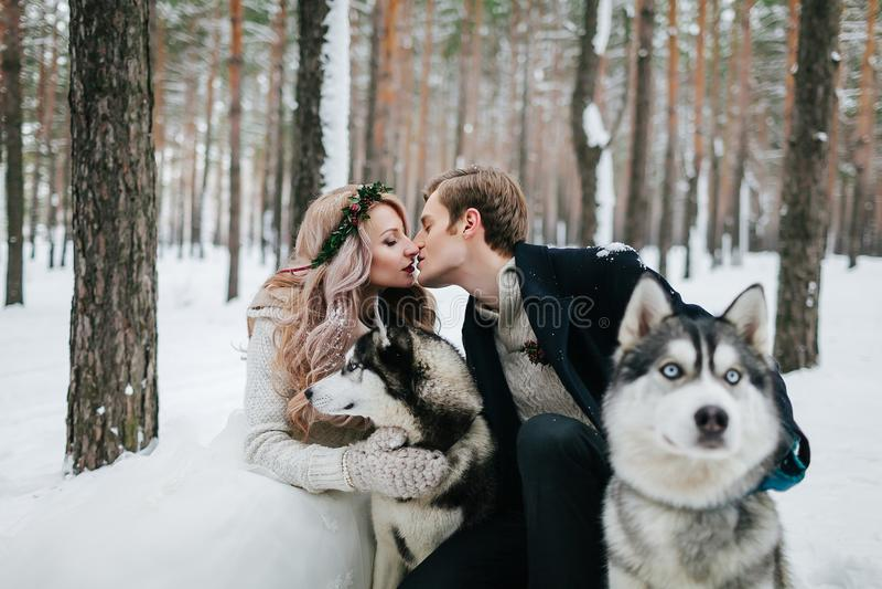 Los recienes casados hermosos se están besando en el fondo del perro esquimal Boda del invierno ilustraciones imágenes de archivo libres de regalías