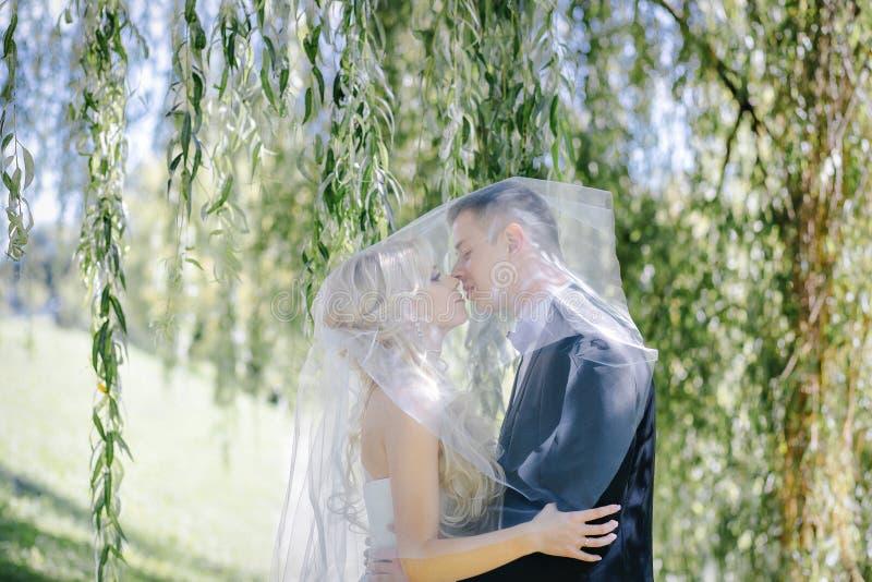 Los recienes casados se besan debajo de un velo en sauce del fondo fotografía de archivo