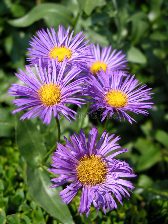 Download Los Regalos De La Naturaleza Imagen de archivo - Imagen de belleza, jardín: 180339