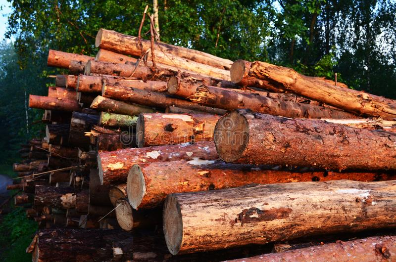 Los registros del pino de diversos tamaños mienten en el bosque imagenes de archivo