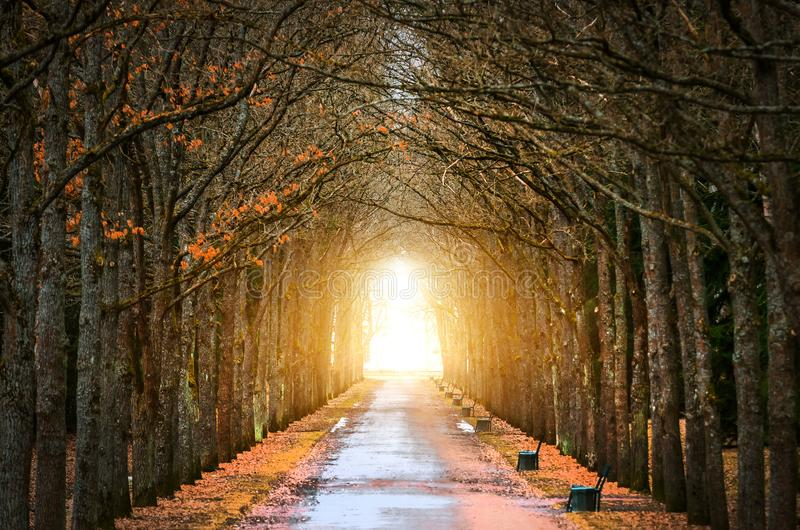 Los robles del árbol hacen un túnel alrededor de la oscuridad, y de la luz en el extremo de la primavera del túnel y del camino imágenes de archivo libres de regalías