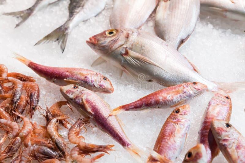Los salmonetes rojos y otros pescados ponen en el hielo imágenes de archivo libres de regalías