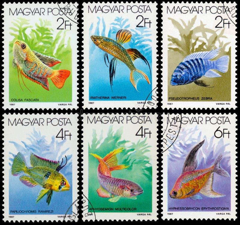 Los sellos impresos en HUNGRÍA muestran pescados del acuario fotos de archivo libres de regalías