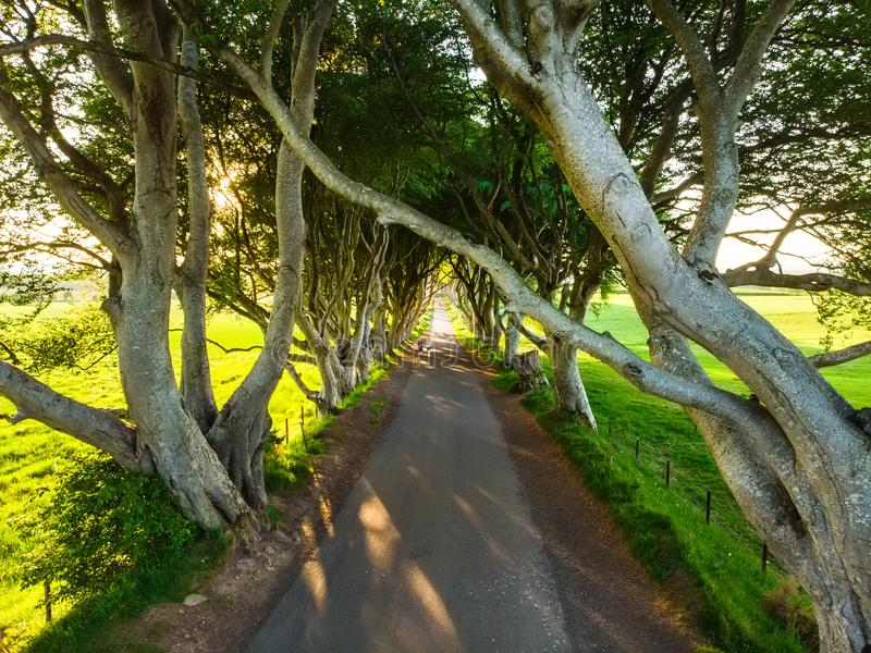 Los setos oscuros, una avenida de los árboles de haya a lo largo del camino de Bregagh en el condado Antrim, Irlanda del Norte imagenes de archivo