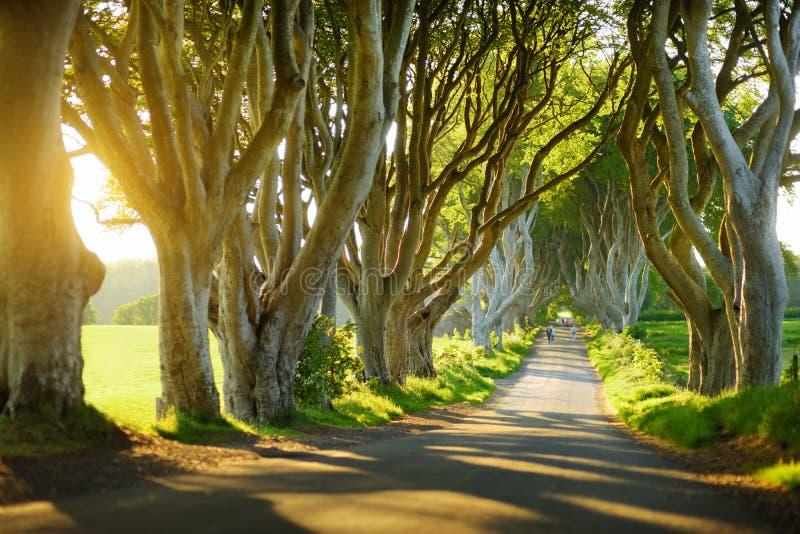 Los setos oscuros, una avenida de los árboles de haya a lo largo del camino de Bregagh en el condado Antrim, Irlanda del Norte foto de archivo libre de regalías
