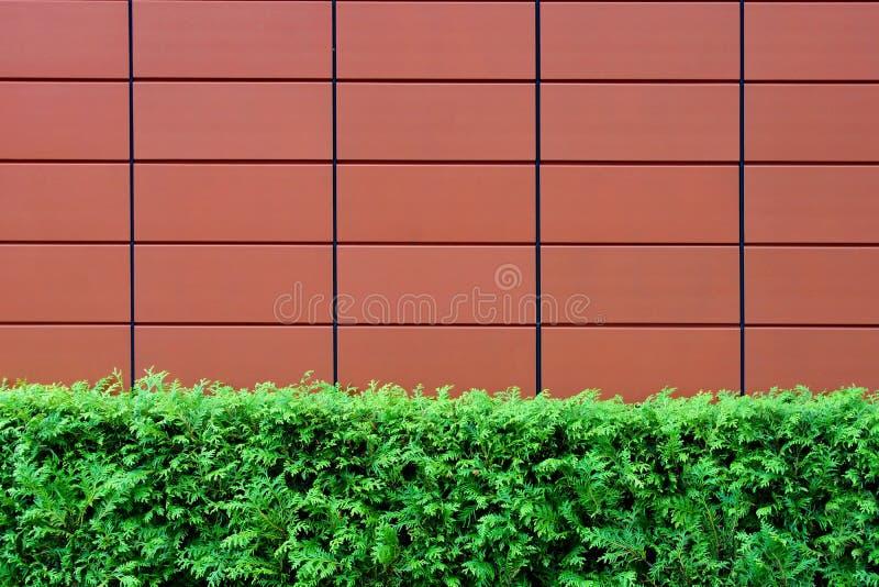 Los setos y Brown tejaron la pared foto de archivo libre de regalías