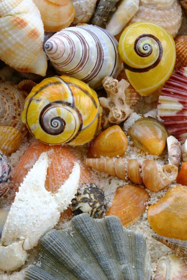 Los shelles y el cangrejo del mar agarran en la playa imágenes de archivo libres de regalías