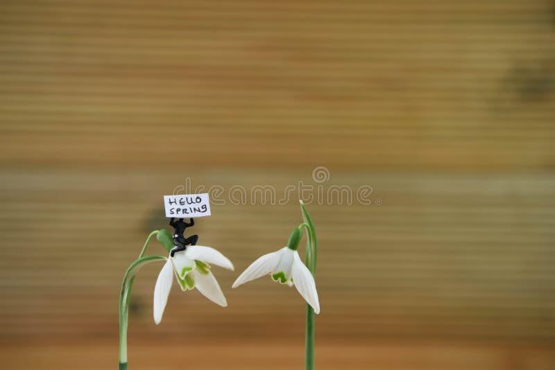Los snowdrops blancos hermosos con la estatuilla miniatura linda de la persona que lleva a cabo una muestra suben para hola la pr foto de archivo