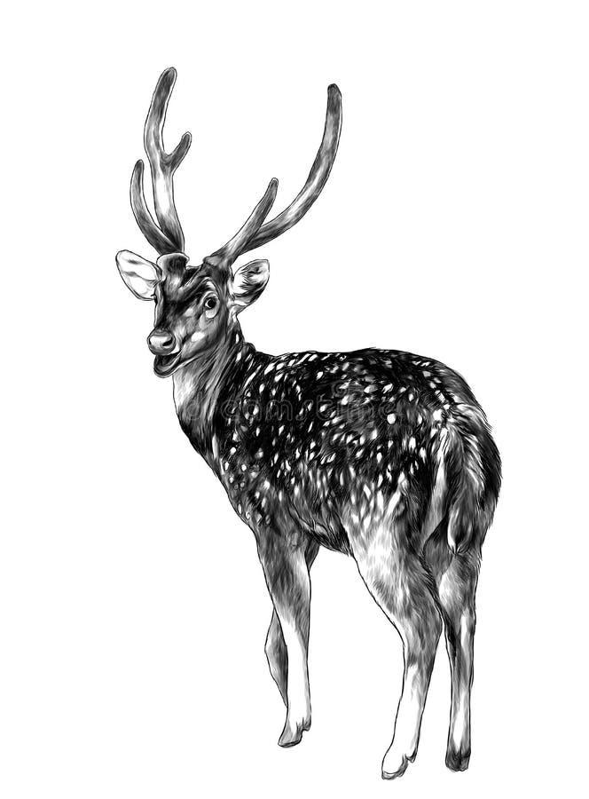 Los soportes manchados de los ciervos integrales con el suyo detrás dado vuelta con su cabeza dada vuelta dan vuelta detrás, stock de ilustración