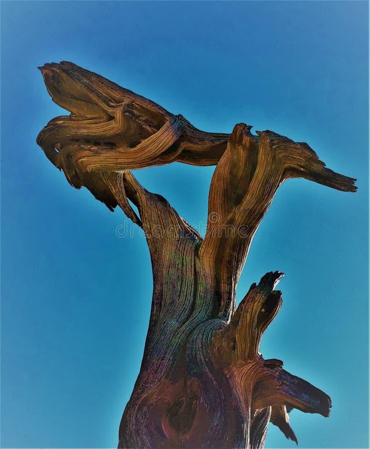 Los soportes muertos resumidos halo del árbol se deformaron contra un cielo cerúleo imagen de archivo libre de regalías