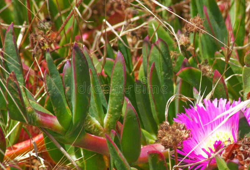 Los succulents florecen y algunas malas hierbas imagenes de archivo