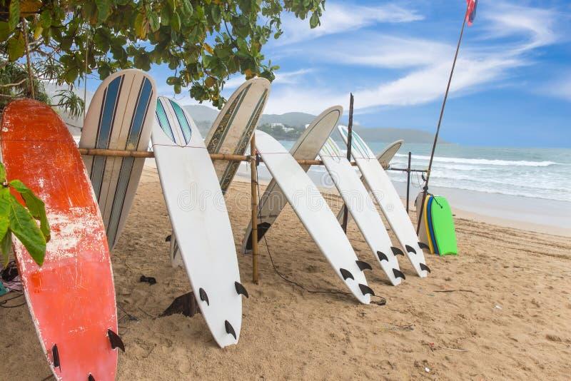 Los tableros de resaca en la arena varan en la playa del kata foto de archivo