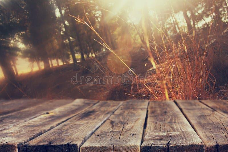 Los tableros y los fondos de madera de la naturaleza del verano se encienden entre árboles imagen de archivo libre de regalías