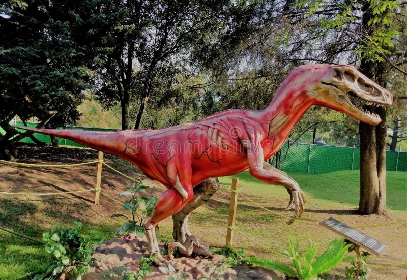 Los tendones y los músculos del dinosaurio, él es feroz foto de archivo