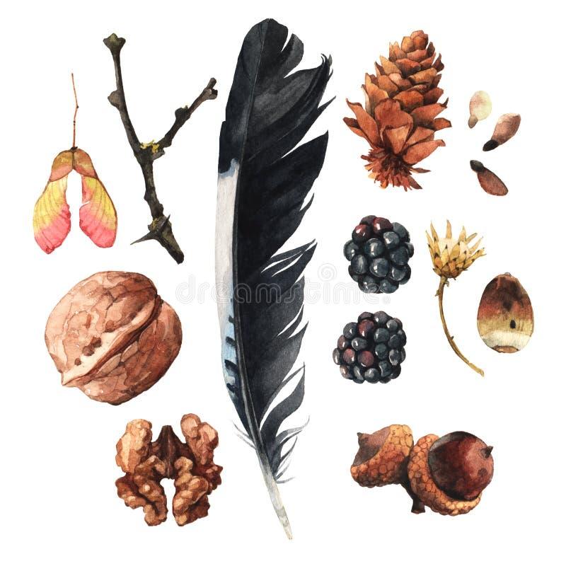 Los tesoros de la naturaleza libre illustration