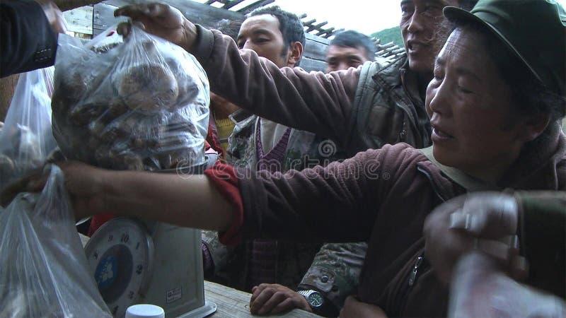 Los tibetanos están buscando un matsutake vendedor en el pueblo de Jidi, se sientan en el centro del área de la producción del ma imagenes de archivo